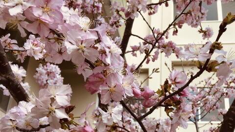 小樽市立桜小学校